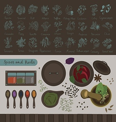 Spices and herbs of the world vector