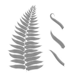 Black and white image of a fern leaf vector