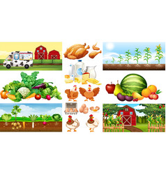 farm scenes with vegetables and chickens vector image