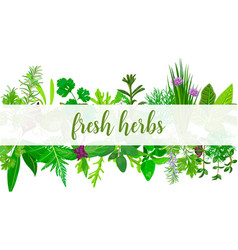Fresh realistic herbs and flowers with text vector