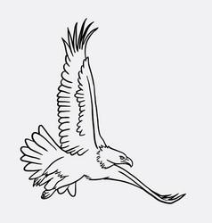 eagle bird flying sketch vector image vector image