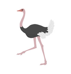 cartoon ostrich vector image