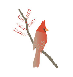 red northern cardinal on tree branch vector image