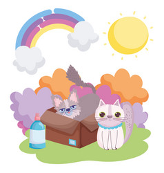 Cat and other in box sun landscape pets vector