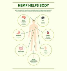 Hemp helps body vertical infographic vector