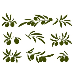 Olive branch set vector