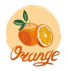 orange whole and slices of oranges vector image