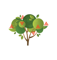 Rowan garden tree with ripe berries vector