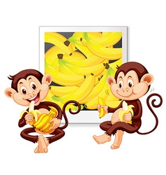 Two monkeys eating bananas vector