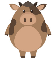 Brown cow on white background vector