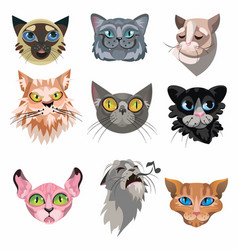 Set various domestic cats faces vector