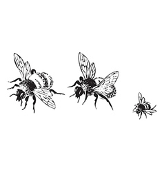 flying bees isolated on white background vector image