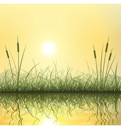 Grass and Reeds vector image vector image