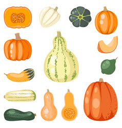 fresh orange pumpkin decorative seasonal ripe food vector image