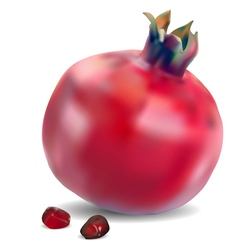 Pomegranate with seeds vector image vector image