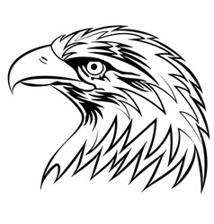 bald eagle or hawk head mascot graphic eps vector image