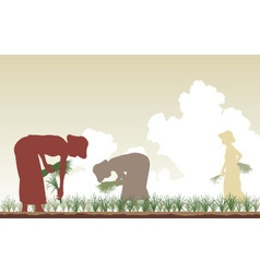 rice planters vector image
