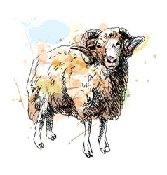 Colored hand sketch ram vector image
