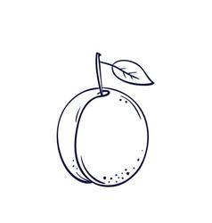 Hand drawn plum vector
