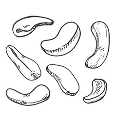 set sketch cashew nuts vector image