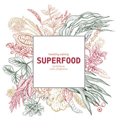 superfood square banner color sketch vector image