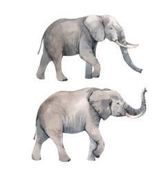 Watercolor elephant vector