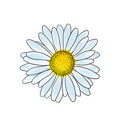 Beautiful doodle sketch daisy flower with outline vector