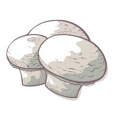 champignon edible mushroom icon fresh raw food vector image