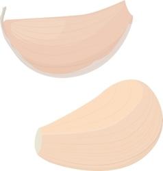 garlic bulb on white background vector image