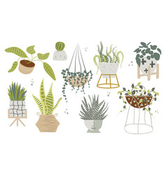Hand drawn tropical potted house plants vector