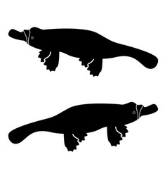 platypus or duckbill icon black color flat style vector image