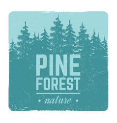 sketch vintage nature pine and fir tree forest vector image