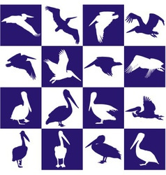Blue and white background with pelican vector