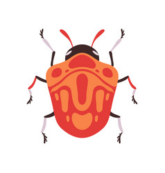Orange bug insect top view flat vector