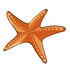 orange starfish on white background vector image