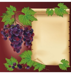 Background with black grape and old paper vector image