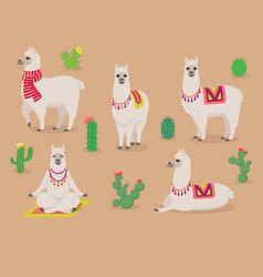 set cute llamas in different poses desert vector image