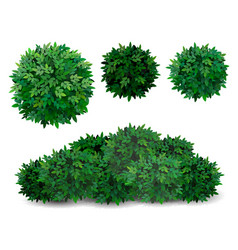Tree crown foliage bush vector
