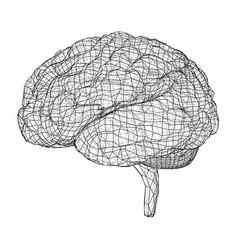 3d outline brain rendering of 3d vector image