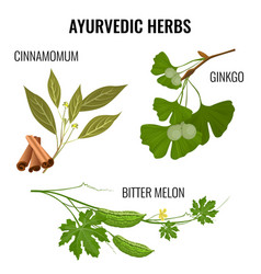 Ayurvedic herbs set of plant branches isolated vector