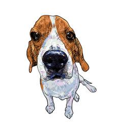 beagle dog sitting on white background vector image