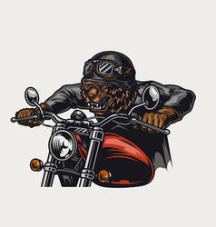Colorful cruel grizzly head biker vector