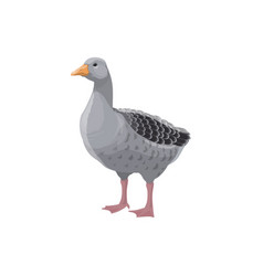 Goose isolated farm grey bird rural poultry fowl vector