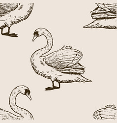 Swan bird engraving vector