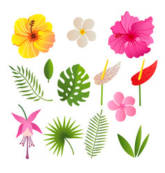 Tropical elements flowers and leaves vector