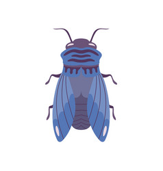 Blue fly insect top view flat vector