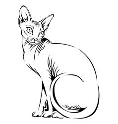 cat sphynx black vector image