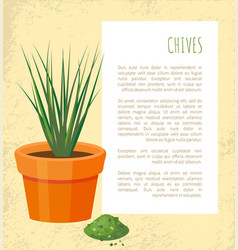 chives poster and plant in pot vector image