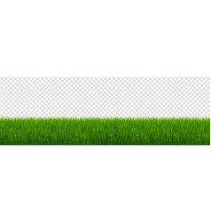 green grass border with transparent background vector image
