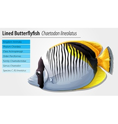 Lined butterflyfish vector image